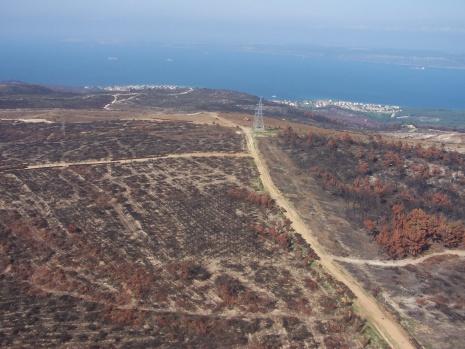 """""""52 orman yangınında 222 hektarlık alan zarar gördü"""""""