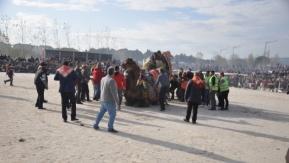 Kepez'de deve güreşleri coşkusu