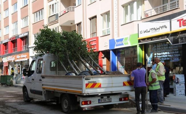 Sivas Belediyesi çürümüş ağaçların yerine yenisini dikti