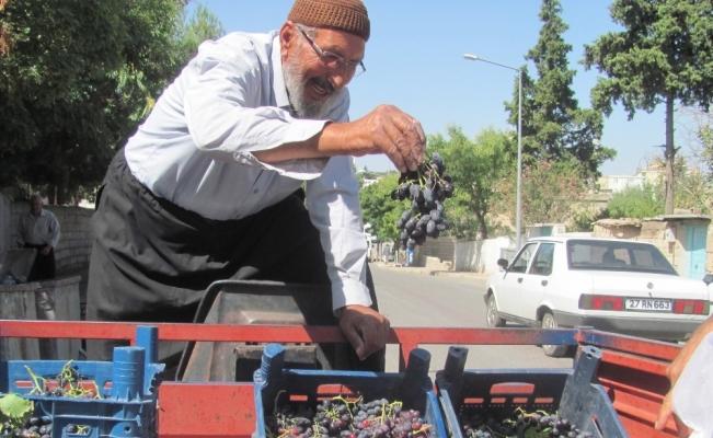 80 Yaşındaki Osman dedenin yetiştirdiği organik üzümlere yoğun ilgi