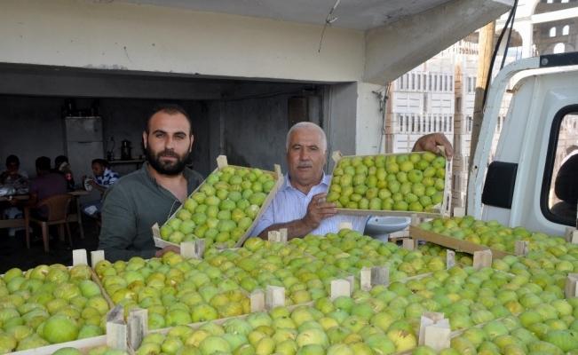 İncirin başkenti Aydın'da taze incir ihracat başladı