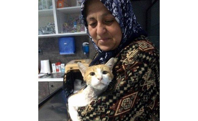 Biga'da kediye başarılı ameliyat