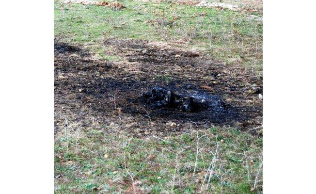 Köpeği diri diri yaktılar