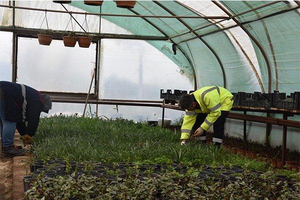 Daha yeşil bir kent için bitki üretimi