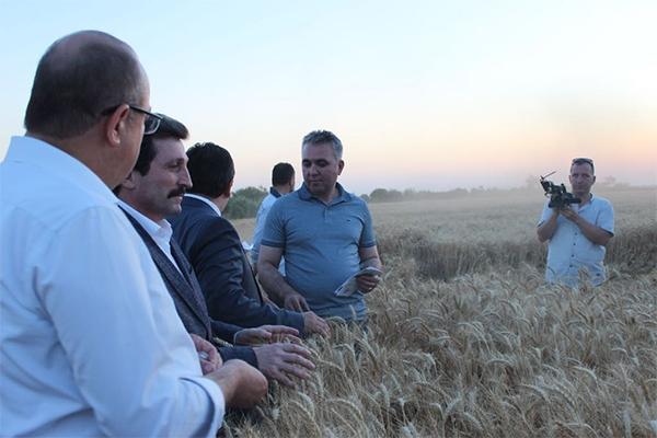 Tevfikiye Köyü'nde tarla günü