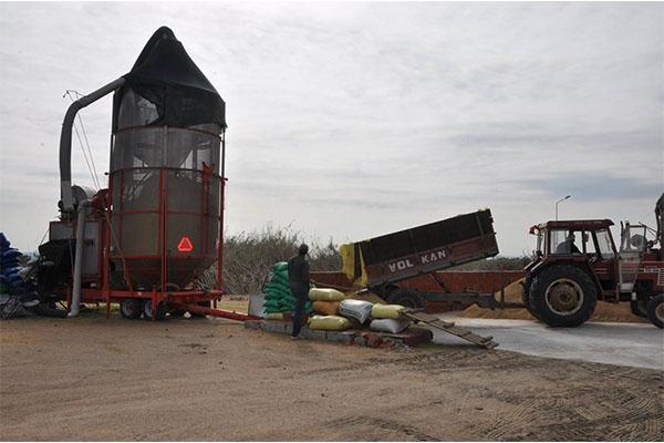 Çeltik üreticileri için kurutma sahası