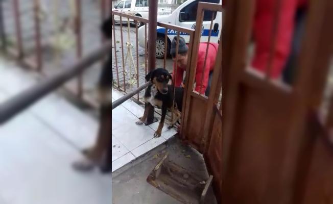 Umurbey'de köpek kurtarma operasyonu