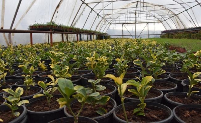 Bitki üretimleri sürüyor