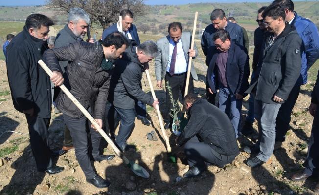 Çevre dostu Ayvacık'ta binlerce ağaç dikildi