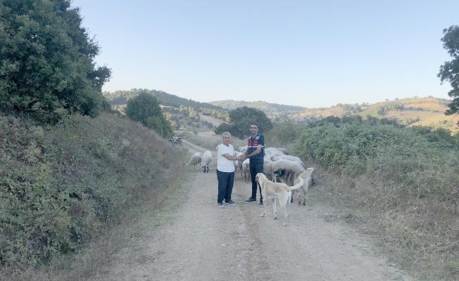 Biga'da kaybolan 56 koyunu jandarma buldu