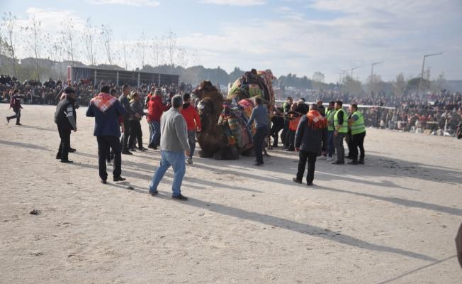 Kepez'de deve güreşleri coşkusu (VİDEO)