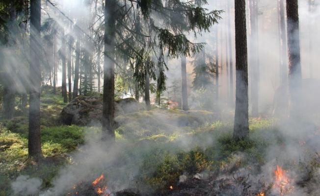Çanakkale Bayramiç'de yangın !