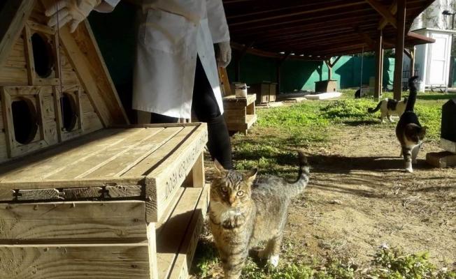 Kedi köyünde temizlik