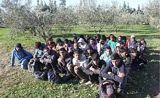 Ayvacık'ta 97 kaçak göçmen yakalandı