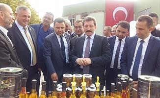 Geyikli'de Zeytin Hasat Şenliği (VİDEO)