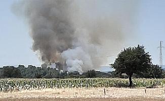 Çanakkale Bayramiç'de yangın kontrol altında !