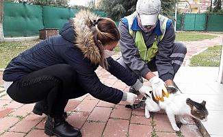 Kedi Köyü sağlık kontrolünden geçti