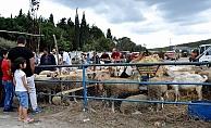 Biga'da canlı hayvan borsası canlandı