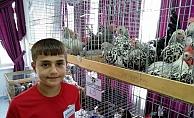 Lapseki'de 5. Geleneksel Kanatlı Hayvan Mezadı yapıldı