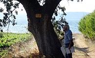 Şairlerin adını anıt ağaçlarda yaşatıyor