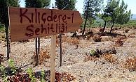 Tarihi Gelibolu Yarımadası'na 15 yeni şehitlik