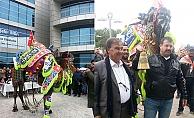 Biga'da deve güzeli yarışması