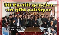 AK Partili gençler arı gibi çalışıyor