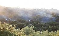 Çanakkale'de orman yangınında 50 hektar zarar gördü