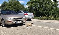 Kazaya neden olan yavru köpek araç altından sağ çıktı