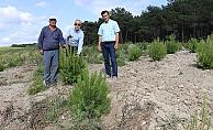 Ulusoy, ağaçlandırma sahalarını inceledi