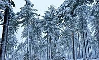 Kazdağlarında kartpostallık kar manzaraları