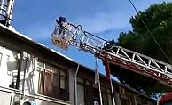 Geyikli'de kedi kurtarma operasyonu (VİDEO)