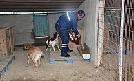 Biga Belediyesi sokak hayvanlarına sahip çıktı