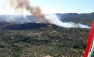 Ayvacık Kozlu Köyü'nde yangın !!