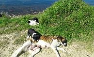 Sokak hayvanları Çanakkale Belediyesine emanet