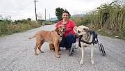 Toplanan bağışlarla, sakat kalan köpeğe yürüteç aldı